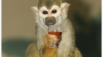 http://pixgood.com/two-drunk-monkeys.html