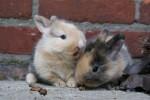 konijn hersenen bevroren  en ontdooid